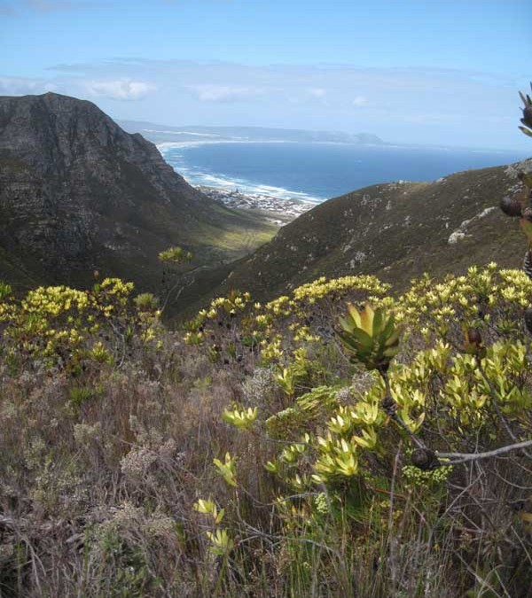 Hermanus Hiking: Walking with Whales