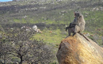 Cape Point Wildlife