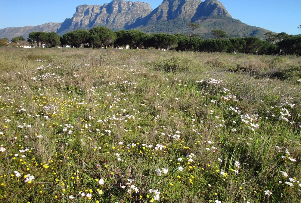 Diamonds in the Rough: Rondebosch Common