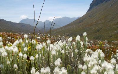 What is Fynbos? An Easy Introduction