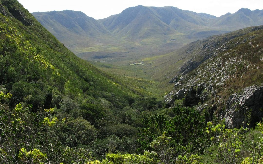 On the Shoulders of Giants: Chadbon's Three Immutable Laws of Fynbos