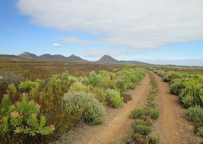 Cape Point Hiking Guide