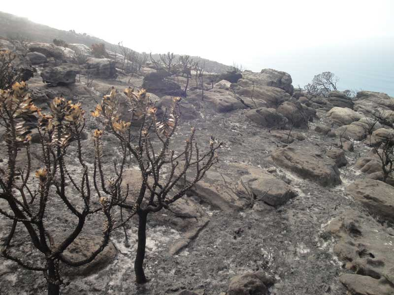The scale of the destruction is mesmerising – only a few pockets of fynbos survived.