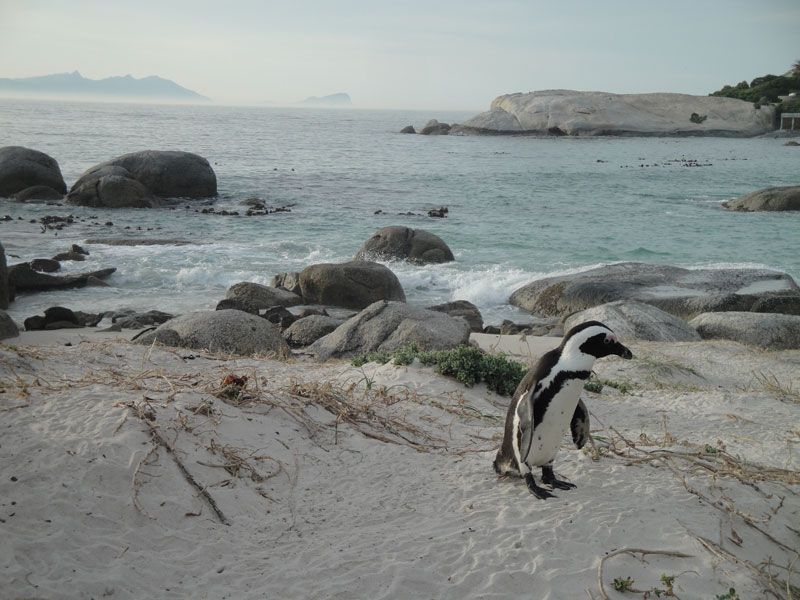 A Table Mountain Hike, Cape Point & Penguins: One Big Day, One Big Experience