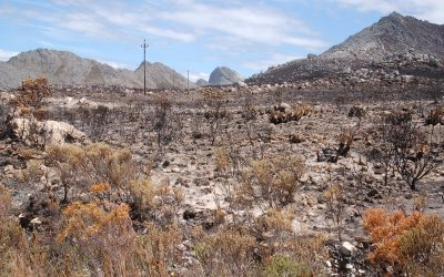 FYNBOS AND FIRE: WHY DOES IT BURN?