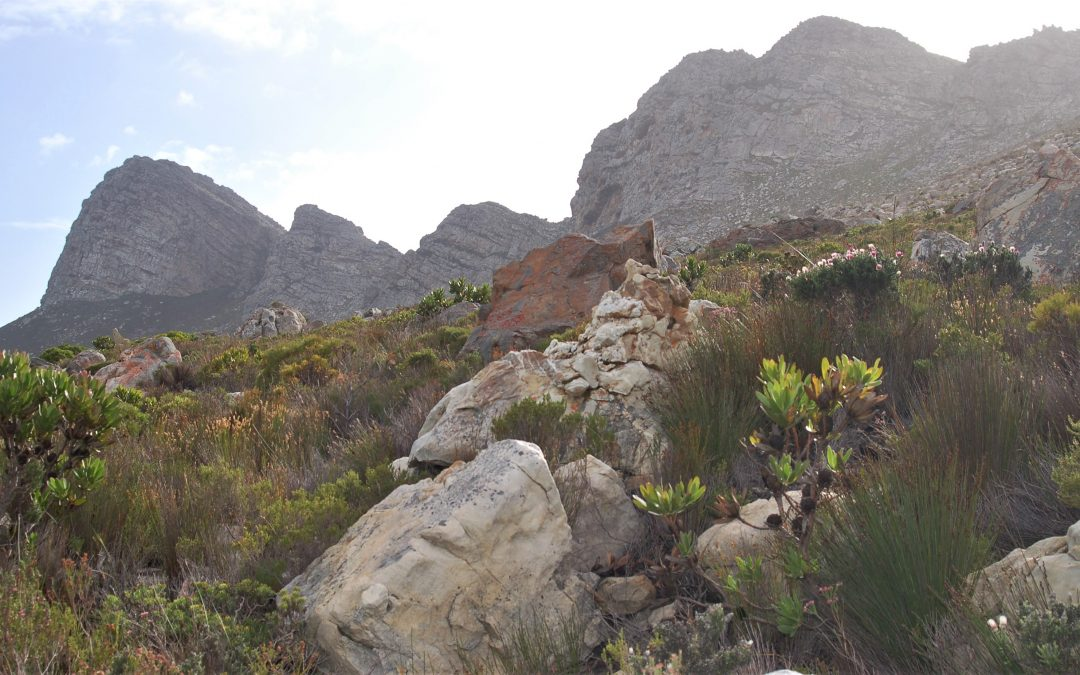 NATURE'S SUPERMARKET: TRADITIONAL USES OF FYNBOS