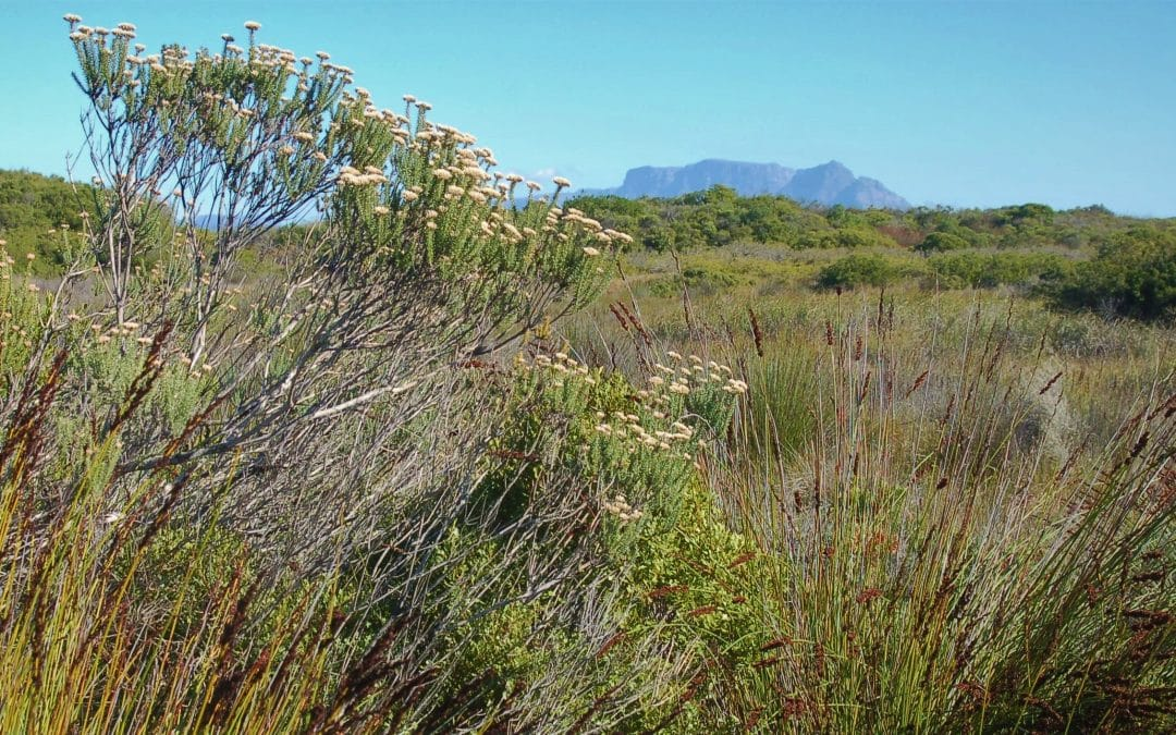 FYNBOS IN THE HOOD: THE CAPE FLATS EXPERIENCE
