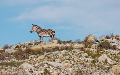 CAPE TOWN NATURE: ALWAYS SOMETHING NEW
