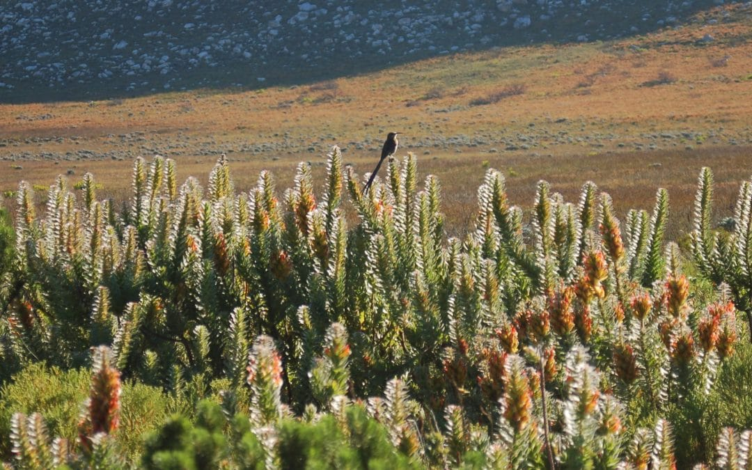 CAPE POINT NATURE RESERVE: WHAT YOU NEED TO KNOW