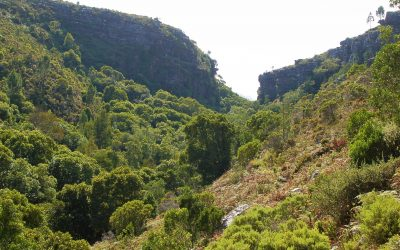 WALKING IN THE WOODS: FYNBOS AND FORESTS