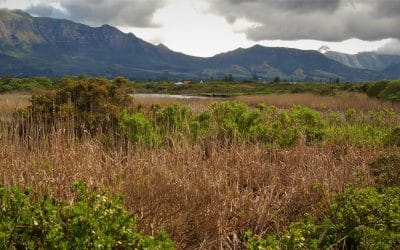 ZANDVLEI NATURE RESERVE: BEFORE THE FLATS WERE FLAT