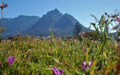 RONDEBOSCH COMMON: AFTERNOON DELIGHT