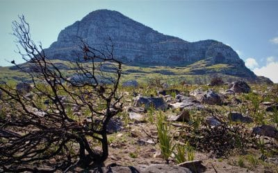 LION'S HEAD: AFTER THE FIRE