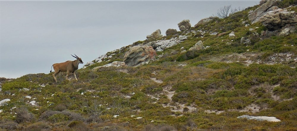 CAPE TOWN'S BEST NATURE RESERVES