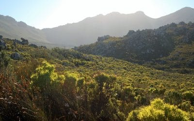 FYNBOS IDENTIFICATION FOR BEGINNERS: FOUR EASY STEPS