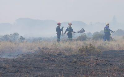 RONDEBOSCH COMMON IS ON FIRE! HOORAY!!